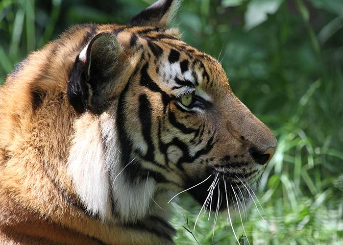 endangered species alexandria zoo